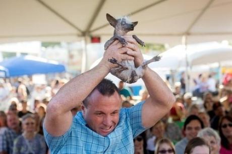 მსოფლიოში ყველაზე მახინჯი ძაღლის ტიტული 17 წლის ჩიხუახუას მეტისმა მოიპოვა