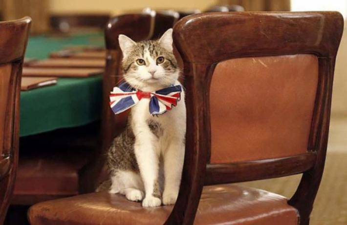 პრემიერები მიდიან - კატები რჩებიან  (+ვიდეო)