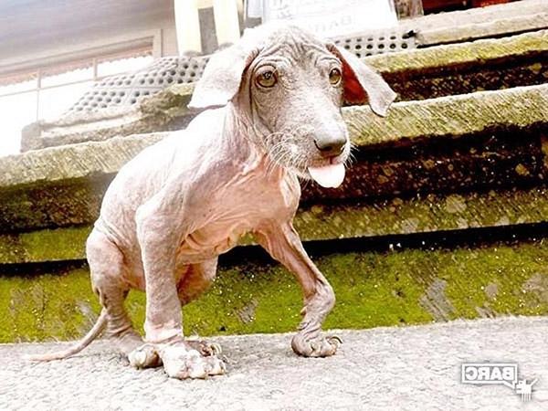 არხში ნაპოვნი ძაღლის სასწაულებრივი გარდასახვა (+ვიდეო)