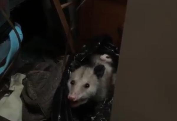 გაოცდებით, როცა ნახავთ, რა აღმოაჩინა ქალმა თავის კარადაში (+ვიდეო)