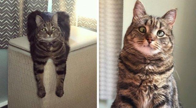 ელამი კატა, რომელსაც სოციალურ ქსელებში ათასობით თაყვანისმცემელი ჰყავს