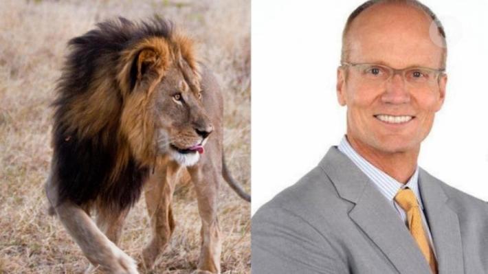 ვალტერ ჯეიმს პალმერი, სტომატოლოგი მინესოტას შტატიდან ბოდიშს იხდის ზიმბაბვეს ულამაზესი ლომის მოკვლის გამო