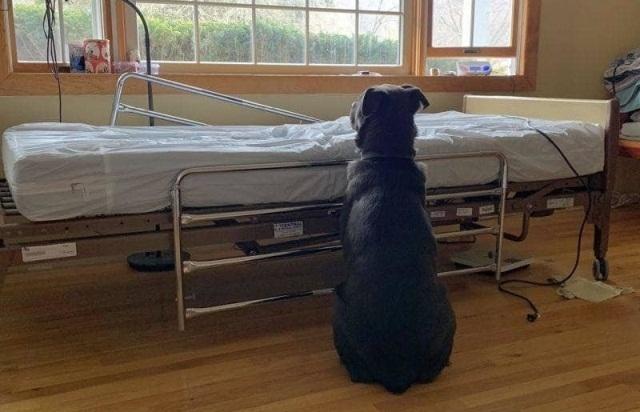 ერთგული ძაღლი პატრონს საავადმყოფოს საწოლთან ელოდა, ცხოველი ვერ ხვდებოდა, რომ ის არასოდეს დაბრუნდებოდა
