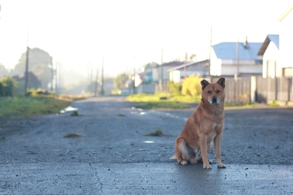 მიტოვებული ძაღლის სტრესი და ფსიქიკა