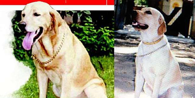 გმირი ძაღლი, რომელმაც 1993 წელს მუმბაიში ათასობით ადამიანის სიცოცხლე გადაარჩინა