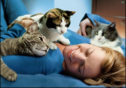 კატების ფარული სამკურნალო თვისებები დამტკიცებულია - განსაკუთრებით ქალებისთვის!