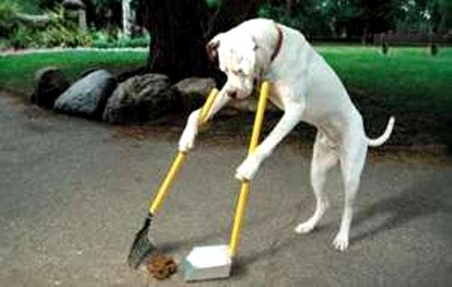 ძაღლის მეპატრონე 50 ლარით დაჯარიმდება, თუ ტერიტორიას ფეკალიებისგან არ გაასუფთავებს