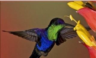 მსოფლიოში ყველაზე პატარა ჩიტი