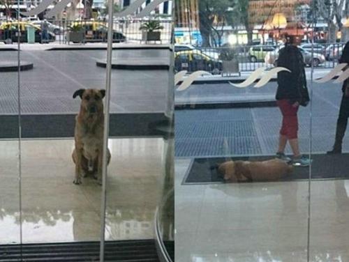 სტუარდესამ სახლში წაიყვანა ძაღლი, რომელიც მას სასტუმროსთან ნახევარი წელი ელოდა