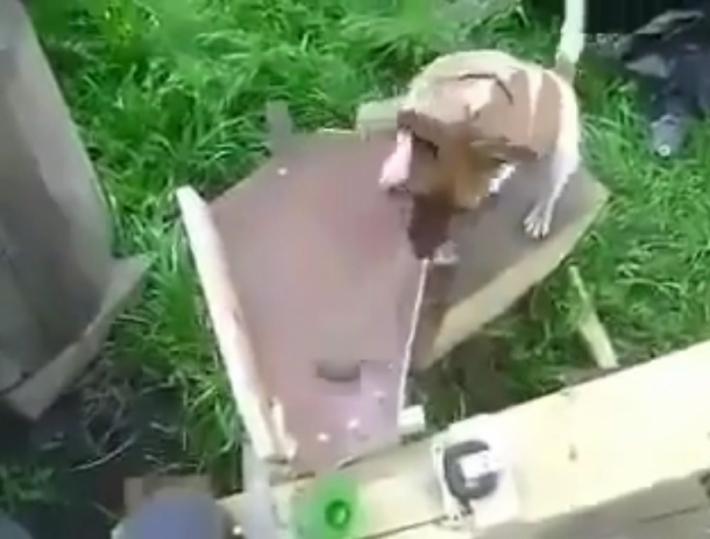 გენიალური იდეა! ინჟინერმა მოიფიქრა, რით გაართოს ძაღლი, სანამ თავად დაკავებულია (+ვიდეო)