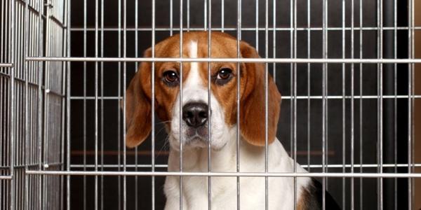 სია კოსმეტიკური და საყოფაცხოვრებო კომპანიებისა, რომლებიც თავის პროდუქტს ცხოველებზე ცდიან