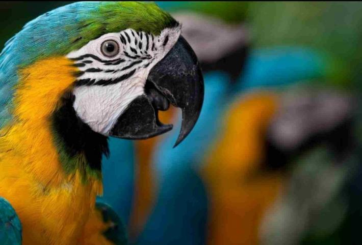 მოშინაურებული ფრინველების სახეობები