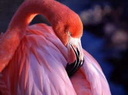 დედამიწის ულამაზესი ნაციონალური ფრინველები