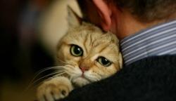 9 მიზეზი, რომ კატა ადამიანის საუკეთესო მეგობარია