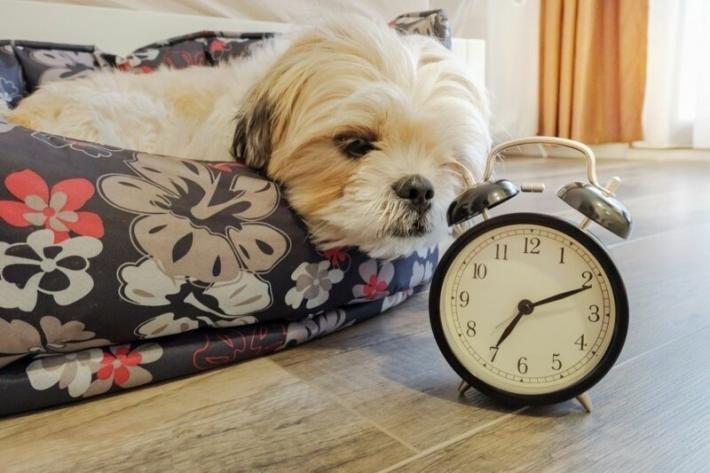 ძაღლები დროს ყნოსვით აღიქვამენ