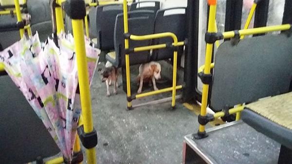 საშინელი ქარიშხლის დროს ავტობუსის მძღოლმა ორი უპატრონო ძაღლი შეამჩნია. მამაკაცის საქციელმა თვითმხილველები გააოცა