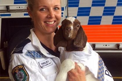 ავსტრალიის პოლიციამ სამსახურში თიკანი აიყვანა