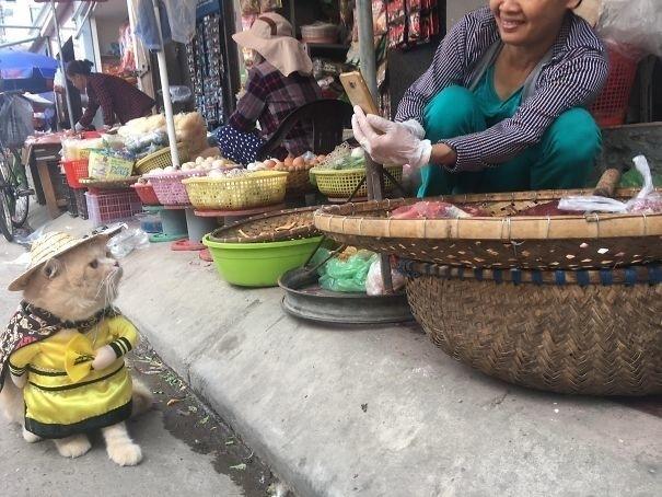 მსოფლიოში ყველაზე წარმატებული გამყიდველი კატა (+ფოტო)