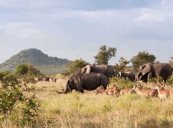 მომდევნო 20 წლის განმავლობაში ბრაკონიერები ყველა სპილოსა და მარტორქას გაანადგურებენ