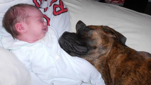 ძაღლების რეაქცია ოჯახის ახალ წევრზე: 10 მაგალითი