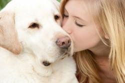 ძაღლის 10 ჯიში, რომლებიც დეპრესიის დაძლევაში დაგეხმარებიან