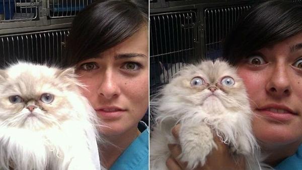 კატების რეაქცია, როდესაც გააცნობიერეს, რომ ვეტერინართან მიიყვანეს (20 სახალისო ფოტო)