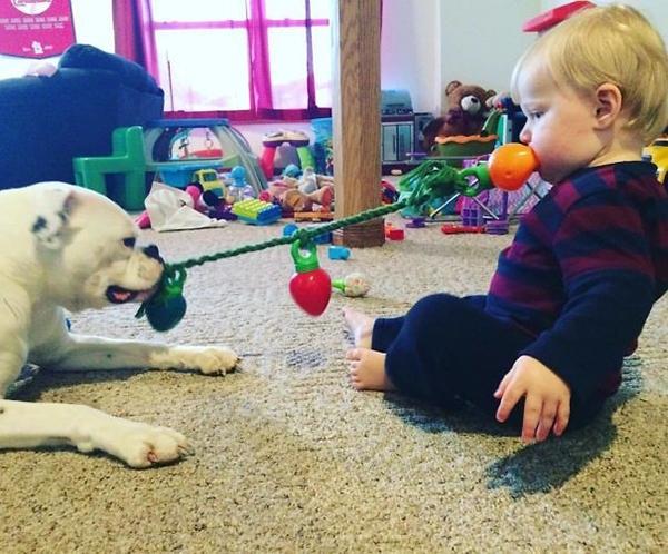 25 მიზეზი, რომ შინაური ცხოველები ბავშვებთან მარტო არ დატოვოთ