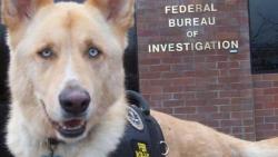 """ცხოველების მიმართ სასტიკი მოპყრობა აშშ-ში 2016 წლიდან კლასიფიცირდება, როგორც """"მძიმე დანაშაული"""""""