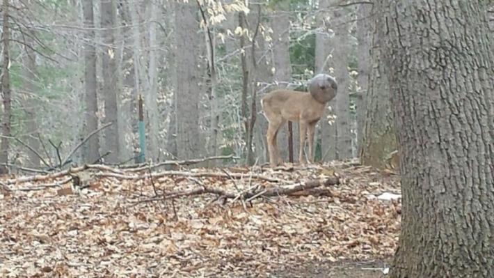 მამაკაცმა ტყეში უცნაური არსება დაინახა და მაშველები გამოიძახა