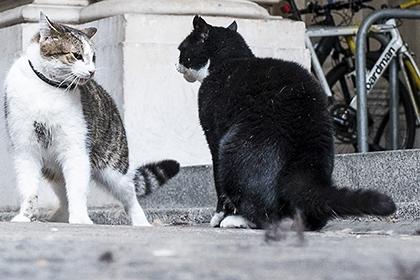 ბრიტანეთის საგარეო საქმეთა მინისტრის კატა პრემიერის სახლიდან მიაბრძანეს
