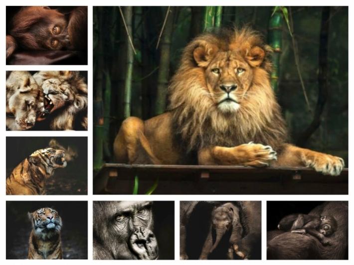 ცხოველები ადამიანის გამოხედვით… (+ფოტო)