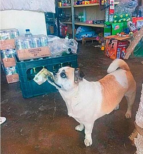 ძაღლი ძეხვის საყიდლად მაღაზიაში ყოველდღე მარტო დადის