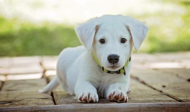 """ვეტერინარის რჩევები, თუ როგორ დავიცვათ შინაური ცხოველი ცხელ ამინდში: """"ძაღლს ბეწვი მოკლედ არ შეჭრათ"""""""