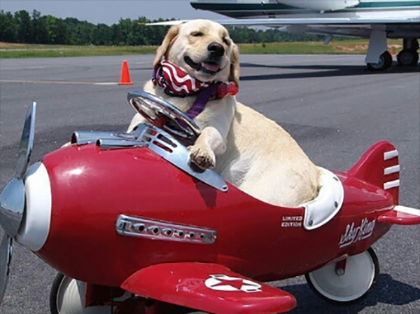 მდიდარი ძაღლები ინსტაგრამიდან (სახალისო ფოტოები)