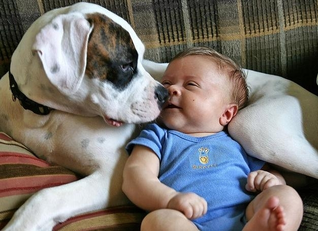 ძაღლები ბავშვებს შფოთვისგან იცავენ