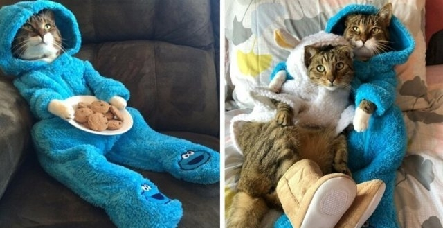 პიჟამაში გამოწყობილი კატა, სახელად ჯოუი, სოციალური ქსელის ვარსკვლავი გახდა