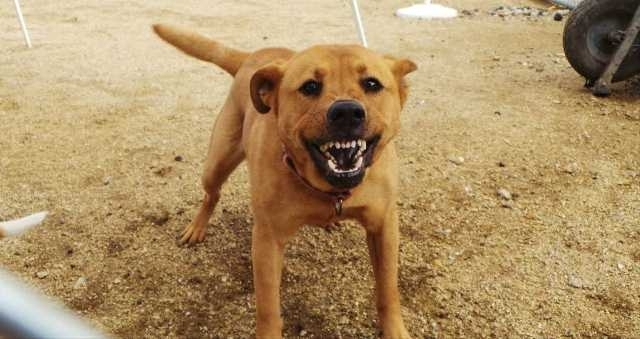 ცხოველთა მონიტორინგის სააგენტო ძაღლების მიერ დაკბენა-დაკაწვრის შემთხვევებზე მოსახლეობას რეკომენდაციებს აძლევს