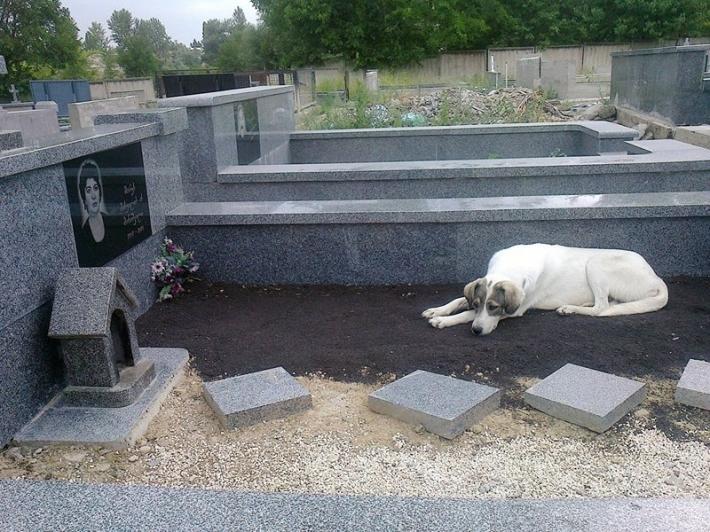 """თბილისელი """"ჰაჩიკო"""" - ძაღლი, რომელიც პატრონის საფლავს მეხუთე თვეა არ ტოვებს"""