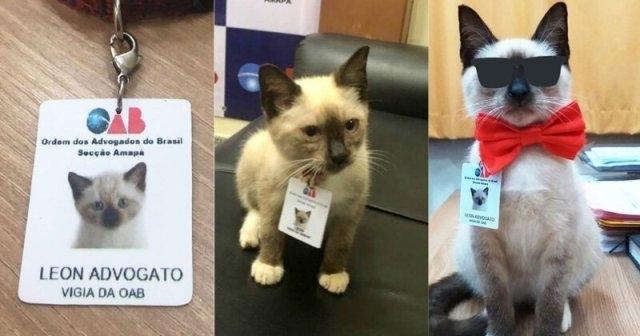 როგორ მიიღო უპატრონო კატამ ადვოკატის თანაშემწის თანამდებობა