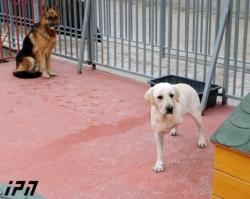 """""""სამოქალაქო ჩართულობის ცენტრი"""" - სვანიძის ქუჩაზე ძაღლების თავშესაფარში შესაბამისი სტანდარტები დაცულია (+ფოტო)"""