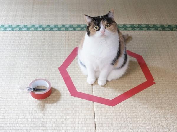 კატების უცნაური ფენომენი, რომელსაც სპეციალისტები ვერ ხსნიან