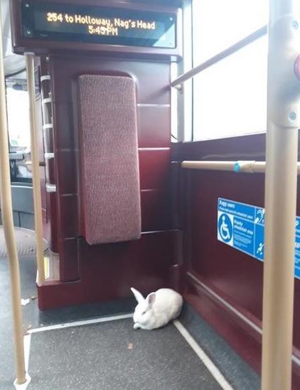 მგზავრობ ავტობუსით და უცებ გვერდით მოგიჯდება ბაჭია... დამოუკიდებელმა თეთრმა ბაჭიამ ლონდონის მგზავრები ააფორიაქა