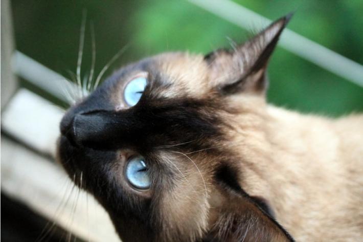 ყველაზე ერთგული კატა მსოფლიოში (+ვიდეო)