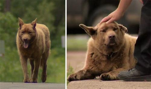 ყოველდღე ეს ხნიერი ძაღლი 6 კილომეტრს გადის, რომ ადამიანებს მოესიყვარულოს