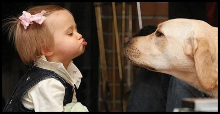 რა არის ზოოთერაპია და რას მკურნალობენ ძაღლები