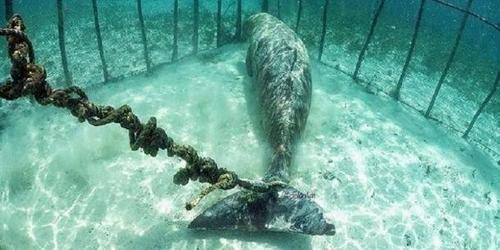 მყვინთავებმა წყალქვეშ დაბმული და გალიაში დამწყვდეული ცხოველები შემთხვევით იპოვეს