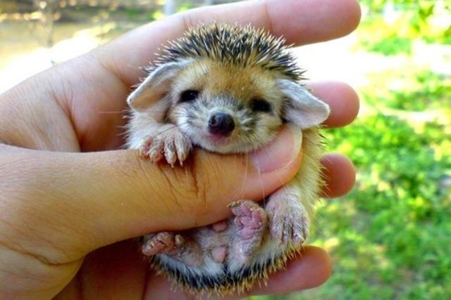 პატარა ცხოველები, რომლებიც ხელის გულზე ეტევიან (ფოტოგალერეა)