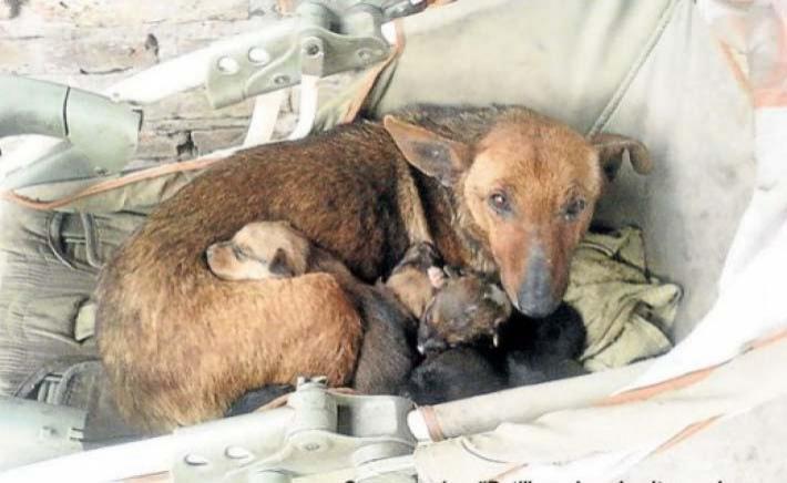უსახლკარო ძაღლი მთელი ღამე ათბობდა ჩვილს, რომელიც საკუთარმა დედამ ყინვაში დატოვა (+ვიდეო)