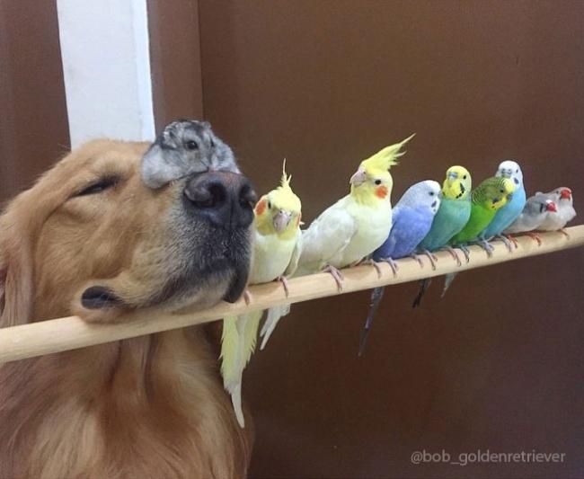 ძაღლი, ზაზუნა და 8 ჩიტი - განსაკუთრებულად საყვარელი მეგობრობა (+ფოტო)