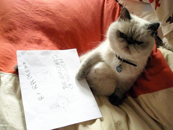 წერილი ჩემს კატას